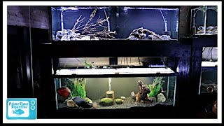 Download How To Build a 125 Gallon Fish Tank Double Stand Video
