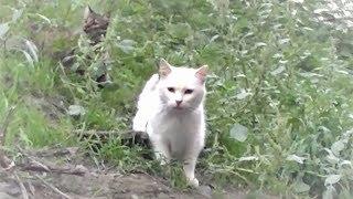 Download おっ!小松殿が動いた!和むシーン~猫の喧嘩まで!番外編 Video