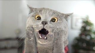 Download Aaron's Animals - Cat Left Home Alone Video
