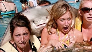 Download 1 HOUR of LAUGHTER - The funniest and best ANIMAL moments of all time - Funny animal compilation Video