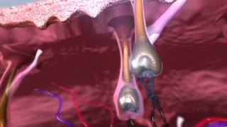 Download Super Hair Removal Animation Video
