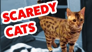 Download Funniest Scaredy Cat Home Videos of 2016 Weekly Compilation | Funny Pet Videos Video