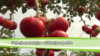 Download Vezivanje paradajza i skidanje zaperaka   Agromedia Savet Video
