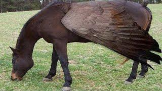 Download 10 Raças Exóticas De Cavalos Únicas No Mundo Video
