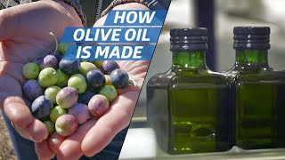Download How Olive Oil Is Farmed and Processed at the Country's Biggest Producer — How to Make It Video