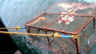 Download Crab Fishing Our Way Video