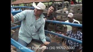 Download Curso Adriano Moraes - Tricampeão Mundial da PBR Video