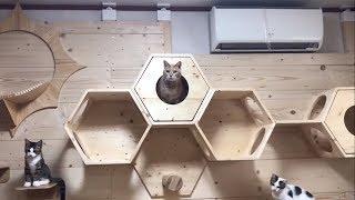 Download 猫部屋を大幅に模様替えしました Video