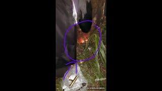 Download MELEDAK ″Pengambilan Pusaka Merah Delima (Real) Ngawen/Japah Kab.Blora Video