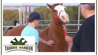 Download Tamme Hanken | Ein Pferd mit vielen Problemen | kabel eins Video