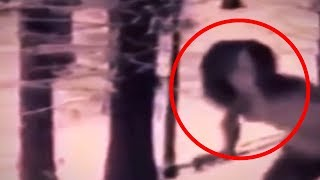 Download 5 Scariest Creatures You Wouldn't Believe if They Weren't Recorded! Video