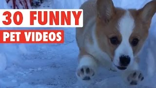 Download 30 Funny Pet Videos Animal Compilation 2016 Video