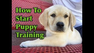 Download How To Start Training Your Puppy! Video
