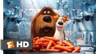 Download The Secret Life of Pets - Sausage Factory Scene (5/10) | Movieclips Video
