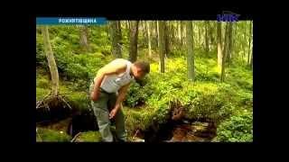 Download На Прикарпатті лісівники знайшли підземне сховище Video