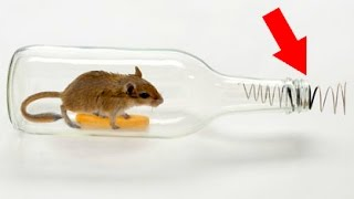 Download How to make a mouse trap with a plastic bottle 😱 Tutorial Video