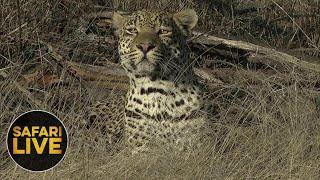 Download safariLIVE - Sunrise Safari - October 25, 2018- Part 2 Video
