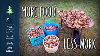 Download 337 lbs of Potatoes! NO digging, NO watering, and VERY LITTLE work! Video
