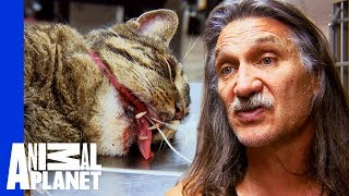 Download Chubbs The Cat Needs Surgery To Fix A Nasty Broken Jaw | Dr Jeff: Rocky Mountain Vet Video