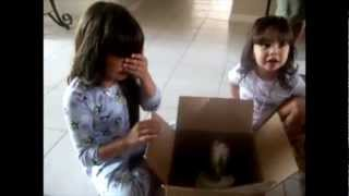 Download Touching beginning of new friendships - Puppy Surprise Present Compilation Video