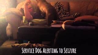Download Service Dog Alerts to Seizure Video