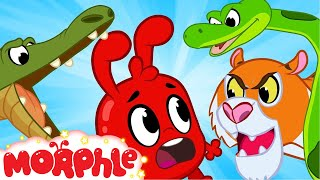 Download Morphle and The Scary Animals - Morphle | Cartoons For Kids | Mila and Morphle | BRAND NEW | Kids Video