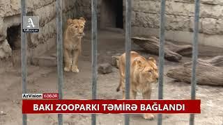 Download BAKI ZOOPARKI TƏMİRƏ BAĞLANDI Video