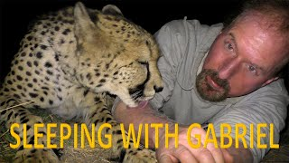 Download Sleeping Outside With Gabriel The Cheetah | BIG CAT Gets Stomach Ache From Eating Foam Mattress Video