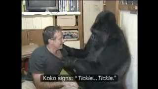 Download Koko the Gorilla with Robin Williams.mp4 Video