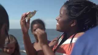 Download Exploring Our Natural World With Baltimore's Brightest Video