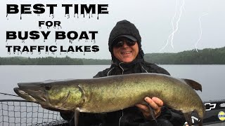 Download Best Time to Visit Busy Boat Traffic Musky Lakes? Video