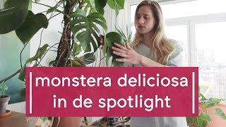 Download Plant Spotlight: Monstera Deliciosa - Super Groene Vingers Video