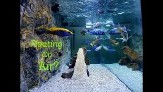 Download Are They Floating? Simple Tips on Crystal Clear Aquarium Water Video