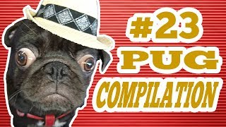 Download Pug Compilation 23 - Funny Dogs but only Pug Videos   Instapugs Video