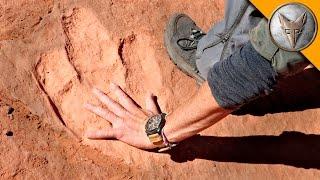 Download Hunting for Dinosaur Tracks! Video