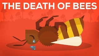 Download The Death Of Bees Explained – Parasites, Poison and Humans Video