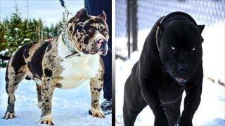 Download 5 سلالات الكلاب تبدو كأنها من تربية الشيطان.. ″شكلها غريب ولا يصدق″ Video