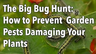Download The Big Bug Hunt: How to Prevent Common Garden Pests Damaging Your Crops Video