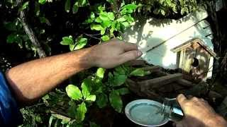 Download Feeding New Zealand Native Birds Video