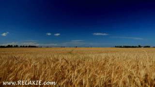 Download 60minutes2relax - Golden Wheat Field Video