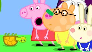 Download Peppa Pig Official Channel | Tiddles the Tortoise Falls on Pedro's Nose Video