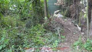 Download spot the sniper - ghillie suit test. Video