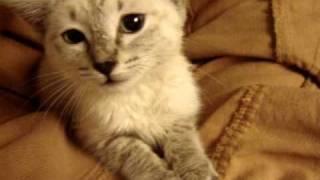 Download feral kitten wants affection Video