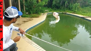 Download SAVING FISH in ABANDONED SWIMMING POOL! Fishing them Out Video