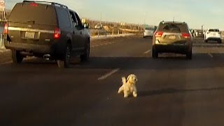 Download Watch As Dog Leaps From Moving Car, And Narrowly Misses Getting Hit Video