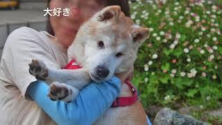 Download 20歳の超高齢犬、タロ兵衛との4年間 Video