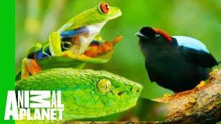 Download Impressive Creatures From The Costa Rican Jungle Video