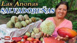 Download Temporada de Anonas en Carretera Litoral de el Salvador sv svl ys Video
