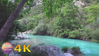 Download Gentle river-Relaxing water sound-Nightingale song-Soothing river sounds-Sleep Relax Study-4K video Video
