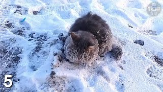 Download Top 10 Animals Found Frozen In Ice Video